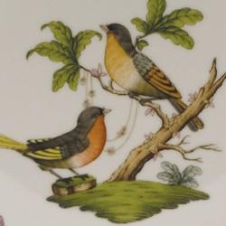 Moccacup - Rothschild Bird