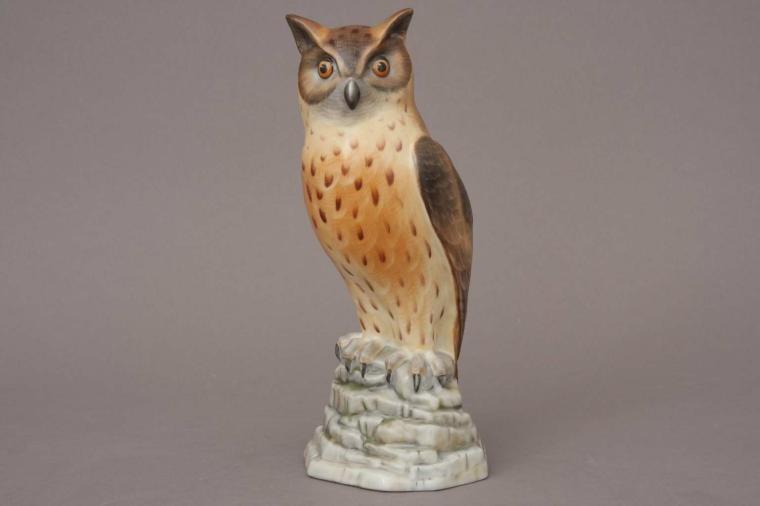 Bubo Maximus (Owl)
