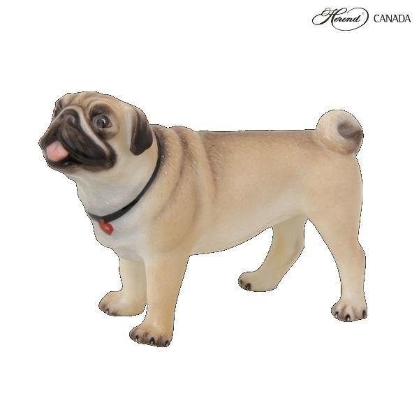 Pug Lola