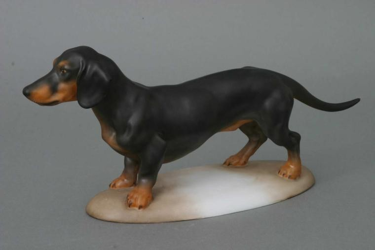 Dachshund, short-haired