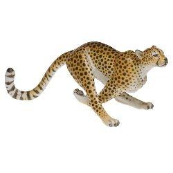 Cheetah / Leopard