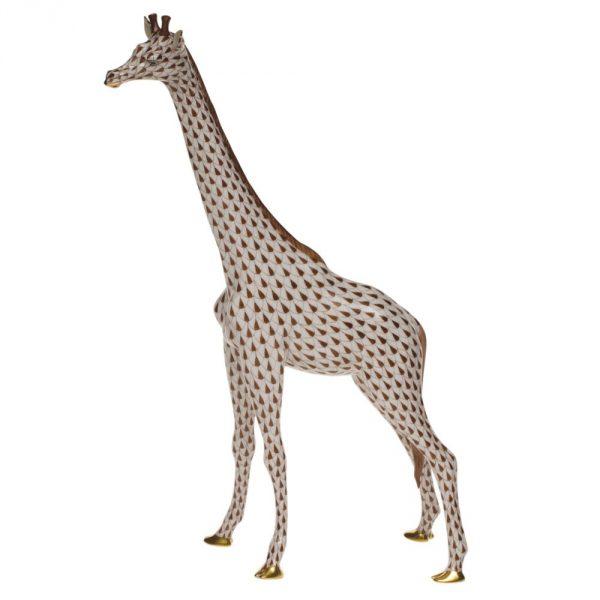 Giraffe, Large