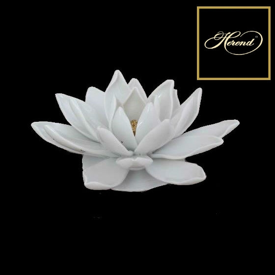 Water Lily, Medium - White