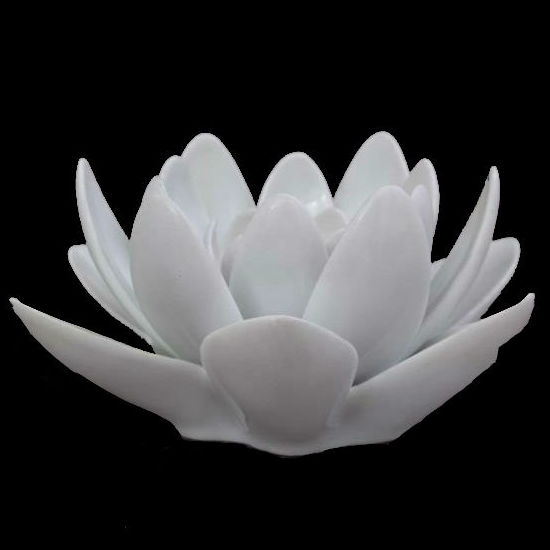 Water Lily, Big - White