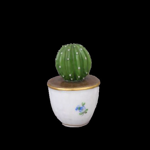 Cactus in pot - Natural