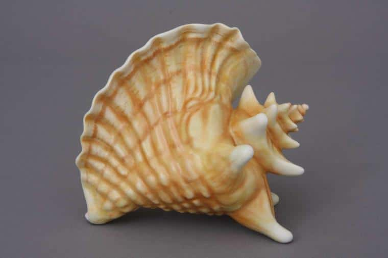 15574-0-00 MCD15574-0-00 MCD Matt Natural Shell Figurine